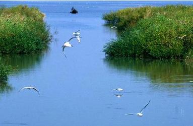 甘肃省委常委会召开会议 省委书记林铎主持 研究部署祁连山保护区生态环境问题整改等工作