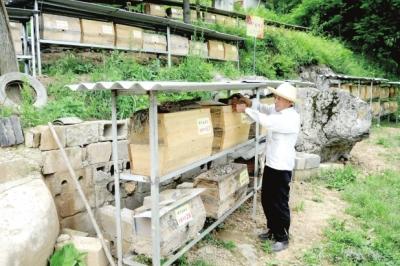 陇南徽县在贫困山区乡镇积极引导发展养蜂产业(图)