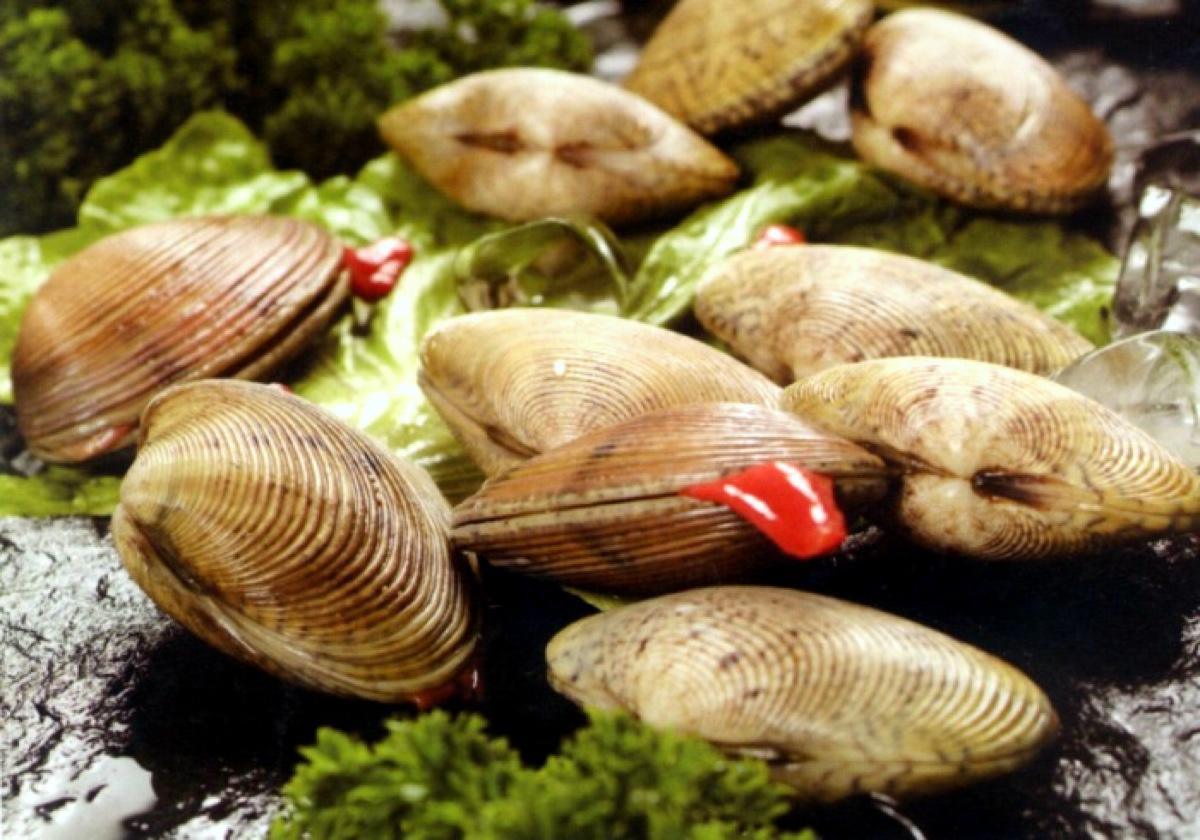 贝类莫常吃 小心有贝毒