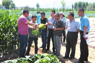 红古推进蔬菜新品种试验推广