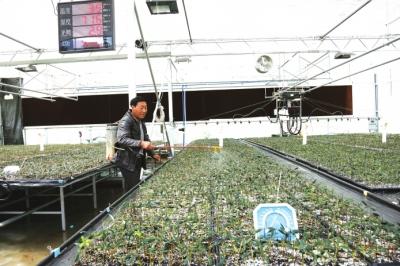 陇南市油橄榄研究所全力促进产业发展(图)