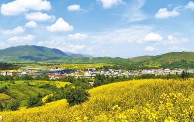 临夏和政县16万亩油菜花进入盛花期