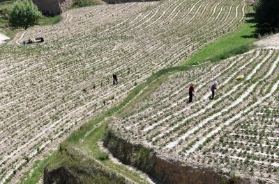 平凉市静宁县为24个乡镇配备测土配方施肥触摸屏专家系统