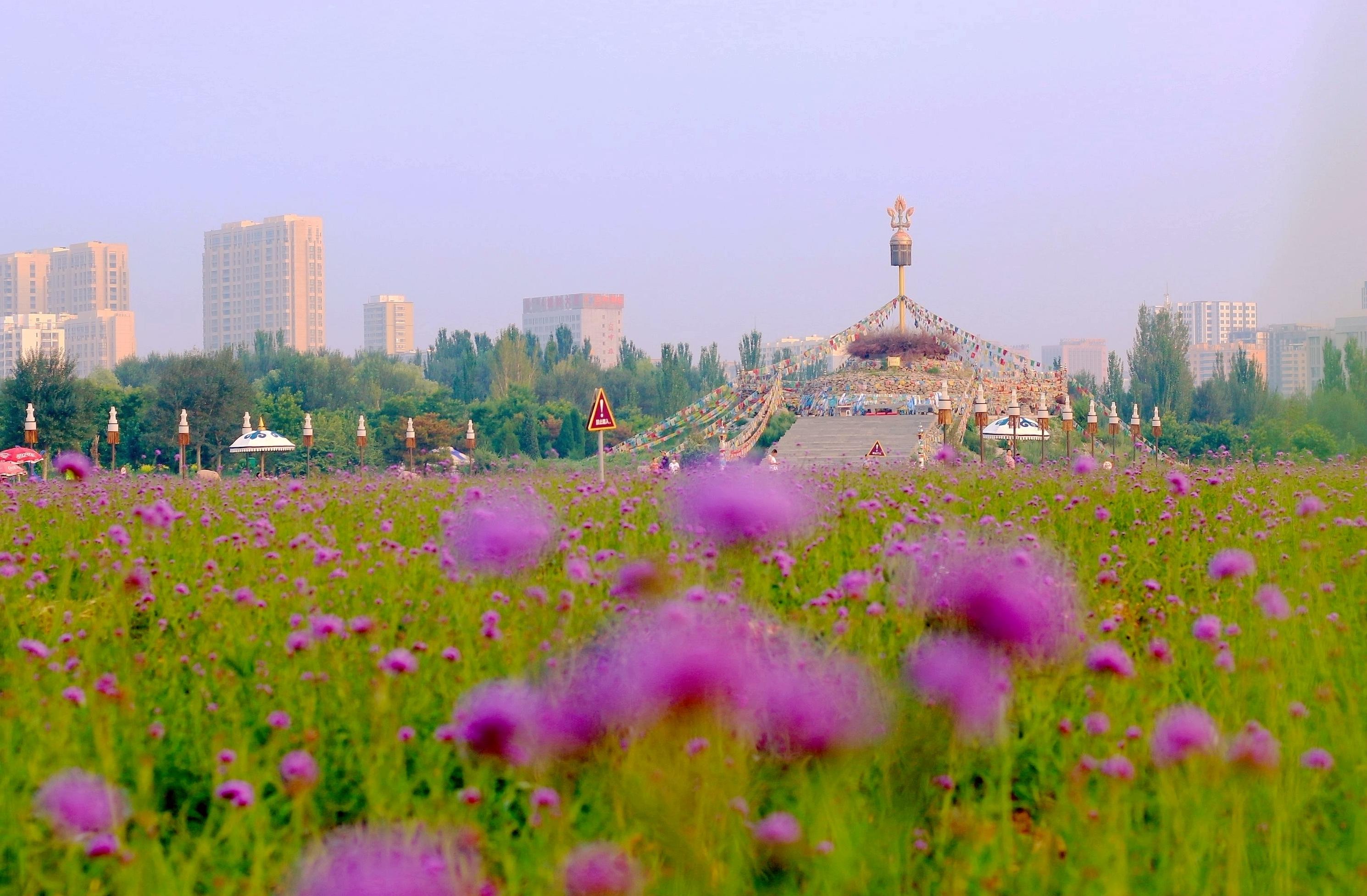 【新闻学子重走西北角】日出前后的赛罕塔拉城中草原(组图)