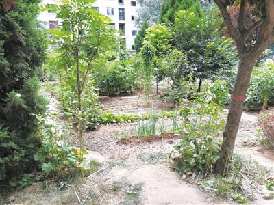 兰州雁滩安居小区公共绿地变身菜园 居民表示质疑