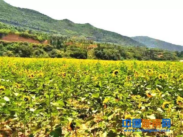 陇南两当蜜源植物种植促蜂产业持续发展