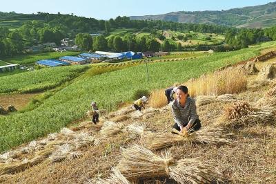 麻家集镇路西村村民抢抓农时收割小麦