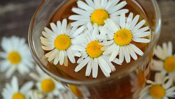 不同体质祛湿,究竟怎么喝凉茶?