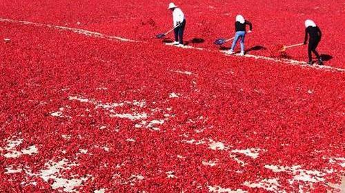 辣椒成中国最大蔬菜产业 产量占世界近一半