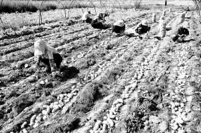 旱塬上播种丰收的希望——甘肃全省旱作农业发展综述