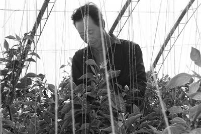 酒泉阿克塞县做精现代农牧业 全力打造生态农业
