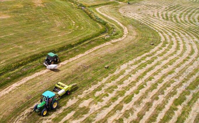 新疆巴里坤万亩草场收割忙