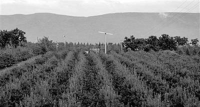 天水麦积区推进农业产业化助农增收