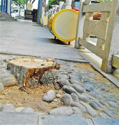 兰州市民反映通渭路两棵行道树被砍 部门答复:系绿化所处理的病害树