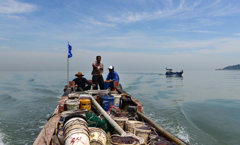 东海海域海蜇特许开捕