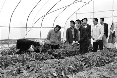 """白银会宁""""1+N""""模式助农增收"""
