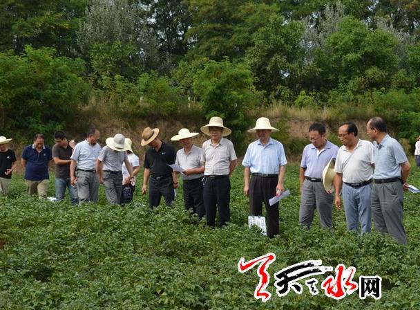 甘肃省农牧厅督导天水马铃薯生产工作