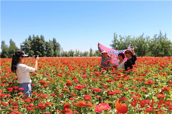 张掖临泽县312国道沿线花海吸引游客驻足拍照(图)