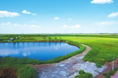 """""""酒泉之肺""""——酒泉肃州区银达镇湿地(图)"""