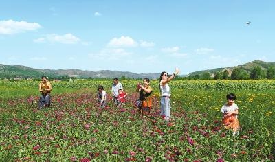 平凉华亭县东华镇打造花卉长廊吸引游客(图)