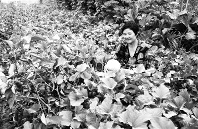 酒泉玉门高效特色农业助农增收