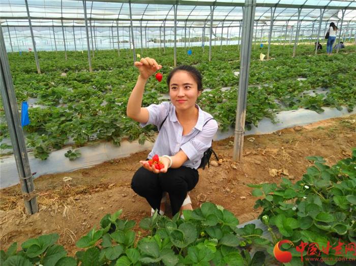 小陇| 美国草莓漂洋过海来宁县  盛夏飘香北上广(组图)