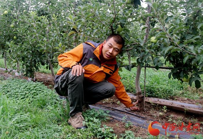 """庆阳宁县焦村镇:万亩""""海升""""矮化苹果基地 鼓了钱包 乐了百姓"""