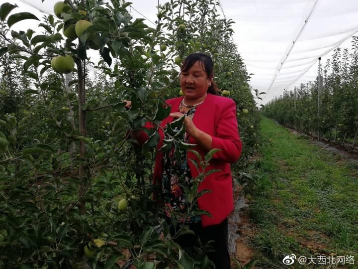 宁县整合5国科技打造苹果品牌 成决胜小康引擎产业(图)