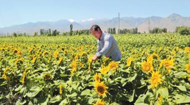 酒泉肃州区大力发展现代制种业