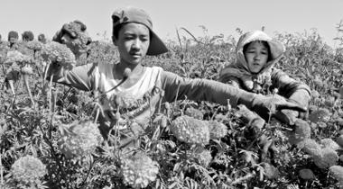 张掖临泽县积极探索壮大农村集体经济