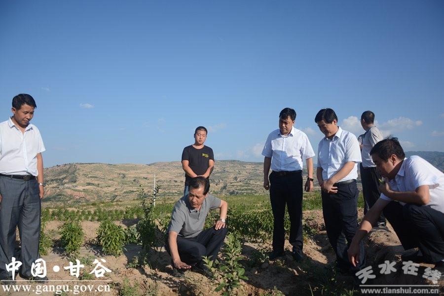 天水甘谷县委副书记、县长申君明深入乡镇检查指导当前重点工作(图)