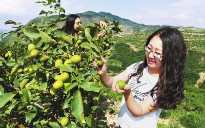 天水麦积区新阳镇温缑村村民采摘早实核桃