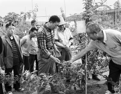 平凉静宁县林业局果树管理专家深入田间开展果树管理技术培训(图)