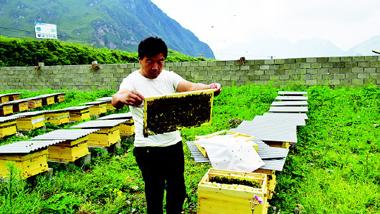"""甘南舟曲中华蜂养殖产业助力脱贫攻坚:""""甜蜜""""产业助小康"""