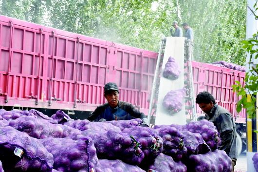 酒泉肃州区积极培植主导产业 建成蔬菜种植示范基地(图)