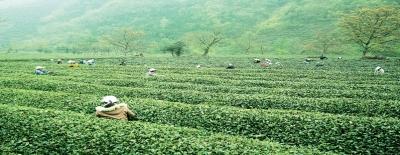 陇南农业特色产业发展纪实