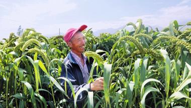 酒泉肃州区发展优质特色产业 促进农民增收