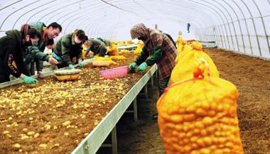 定西市安定区大力推广马铃薯配套综合技术