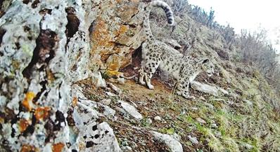 祁连山国家级自然保护区拍摄到多种珍稀野生动物影像