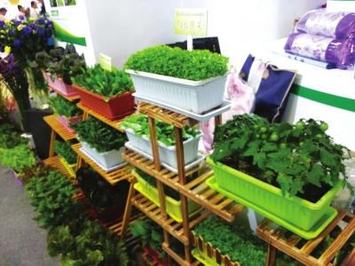 2017甘肃农博会:盆栽蔬菜走俏农博会(图)