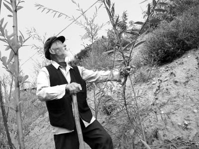 【治国理政新实践·甘肃篇】半个世纪的坚守——平凉市华亭县耄耋老人王登成植树造林的故事