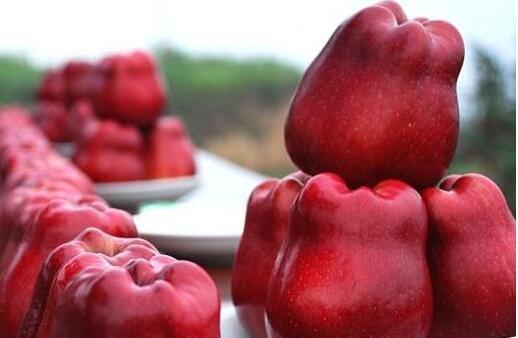 甘肃天水:花牛苹果首次出口意大利