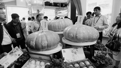 寻求农业发展新突破——从农博会看甘肃省农业供给侧结构性改革