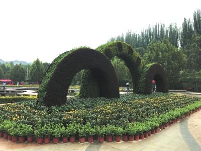 兰州植物园4万余盆菊花迎国庆(图)