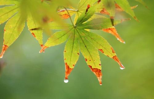 嘉兴:秋分秋雨秋叶黄