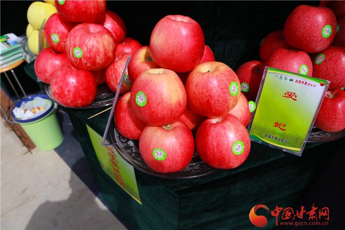 庆阳苹果熟了 开园采摘邀您来尝鲜(组图)