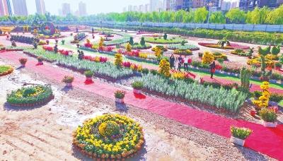 国庆期间 20万盆百合、菊花将临夏市的大街小巷装点得花团锦簇