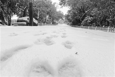 今秋兰州这场雪比往年早来了一个月(图)