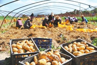 壮大首位产业 振兴一方经济——定西市安定区马铃薯产业发展综述