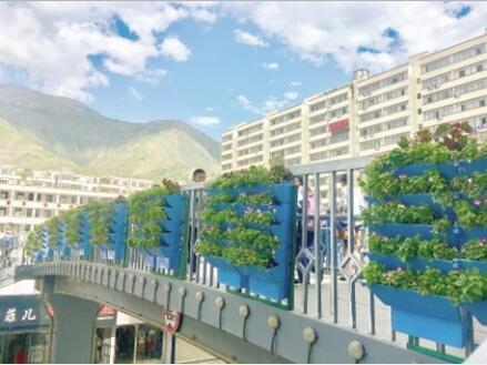 陇南:武都区对城区多处地段进行绿化美化